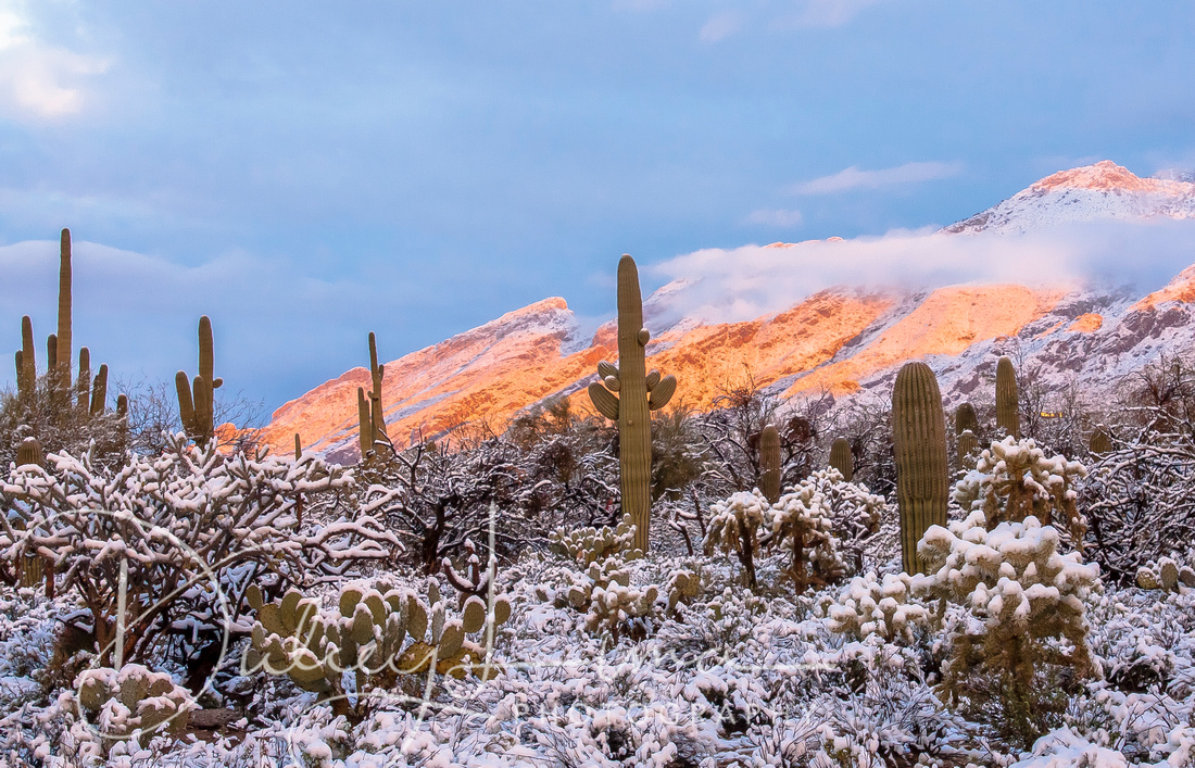 Winter in the Sonoran Desert