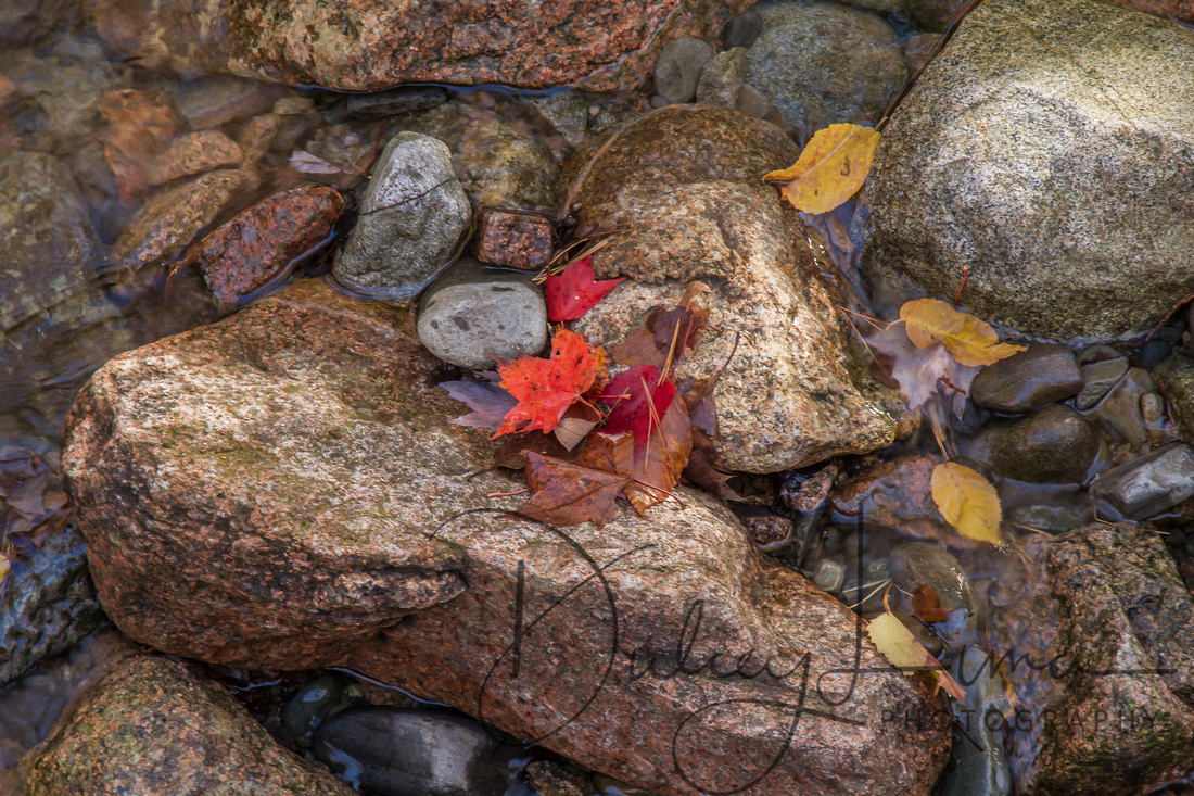 Leaves Falling on Rocks and Water
