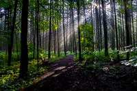 God Rays through the Forest